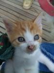 Marimba, a lively boy