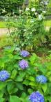 June flowers (2)