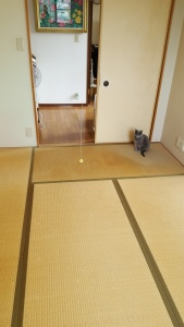 old tatami