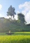 kakashi (2)